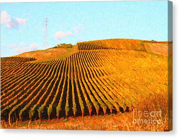 Napa Valley Vineyard Canvas Print by Wingsdomain Art and Photography
