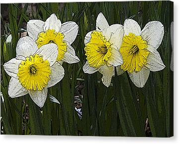 Narcissus Canvas Print by Michael Friedman
