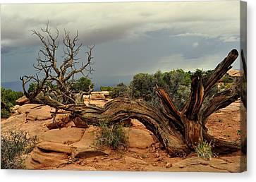 Narley Tree Canvas Print by Marty Koch