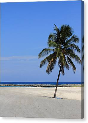 Canvas Print featuring the photograph Nassau Palm by Coby Cooper