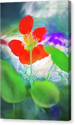Canvas Print featuring the photograph Nasturtium by Richard Piper
