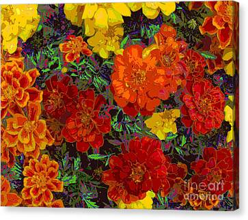 Nasturtiums Canvas Print by Anne Havard