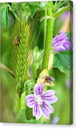 Canvas Print featuring the photograph Natural Bouquet by Pedro Cardona