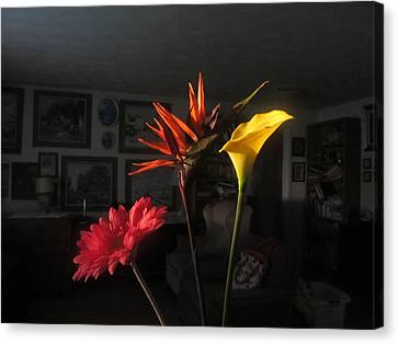 Canvas Print featuring the photograph Natural Light by Tina M Wenger