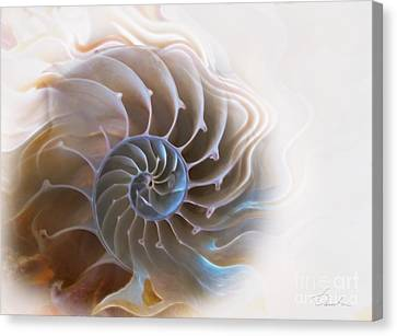Natural Spiral Canvas Print