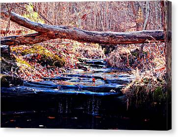 Canvas Print featuring the photograph Natural Spring Beauty  by Peggy Franz