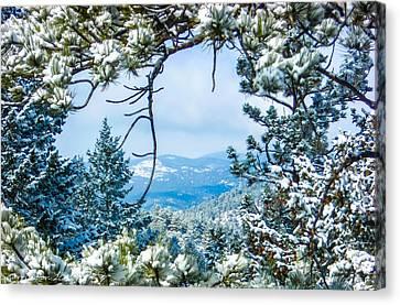 Canvas Print featuring the photograph Natural Wreath by Shannon Harrington