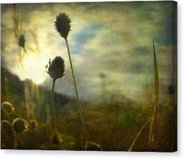 Canvas Print featuring the photograph Nature #11 by Alfredo Gonzalez