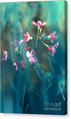 Nature Fantasy Canvas Print by Tanja Riedel
