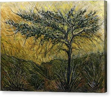 Nature Landscape Green Thorns Acacia Tree Flowers Sunset In Yellow Clouds Sky  Canvas Print by Rachel Hershkovitz