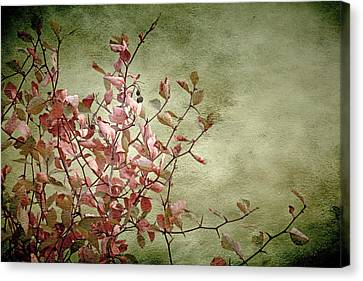 Nature On Parade Canvas Print by Bonnie Bruno