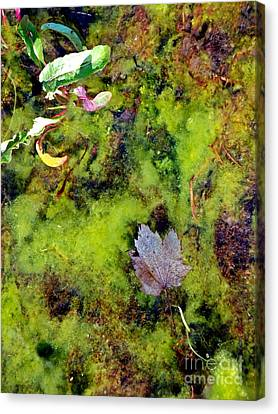 Nature's Absract Canvas Print by Christian Mattison