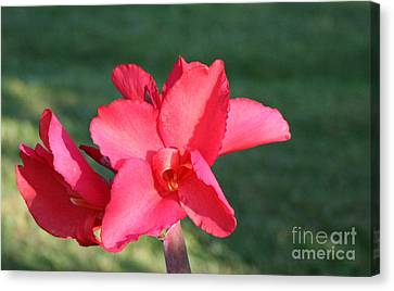 Canvas Print featuring the photograph Nature's Beauty 2 by Michael Waters