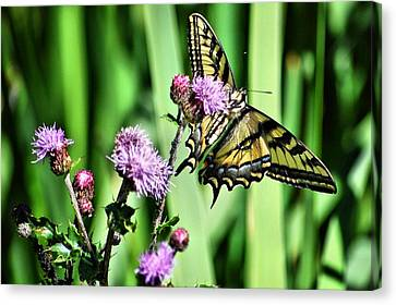 Natures Beauty Canvas Print by Don Mann