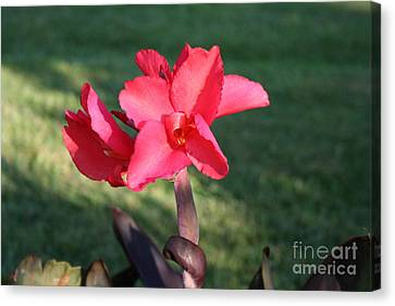 Canvas Print featuring the photograph Nature's Beauty by Michael Waters