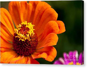Natures Color  Canvas Print by Dana Kern