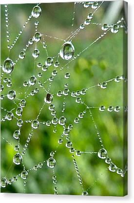 Natures Jewels Canvas Print by Debra Collins