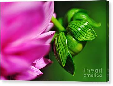 Nature's Perfection Canvas Print