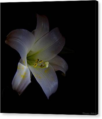 Natures Rule Canvas Print by Victoria Ashley