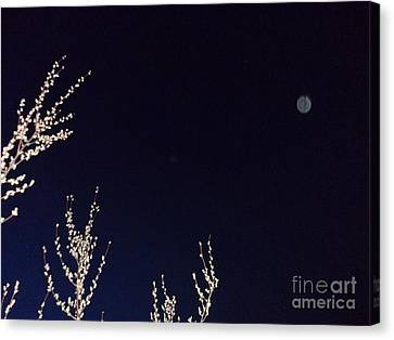 Nature's Watchful Eye Canvas Print by Doug Kean