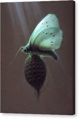 Canvas Print featuring the painting Nausithous by Shawn Kawa