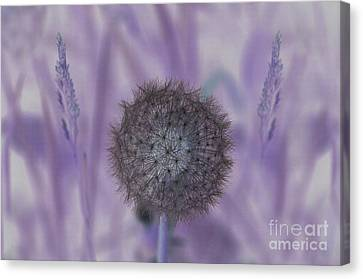 Navigating The Purple Haze Canvas Print by The Stone Age