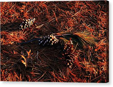 Needles Cones And Oak Leaf Canvas Print by Larry Ricker