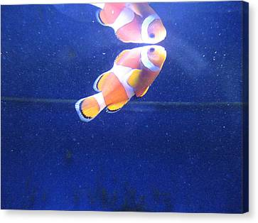Nemo Canvas Print by Davor Sintic