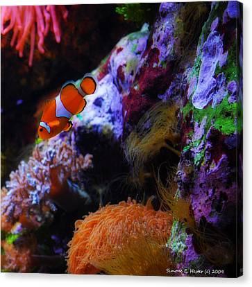 Clown Fish Canvas Print - Nemo by Simone Hester