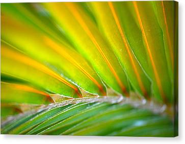 Neon Palm Canvas Print by Kimberly Gonzales