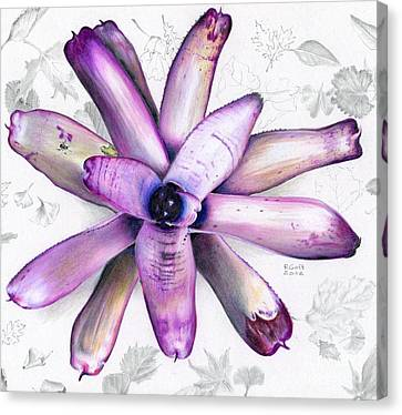 Neoregelia Kawiki Canvas Print by Penrith Goff
