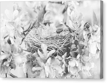 Nest In Black And White Canvas Print by Stephanie Frey