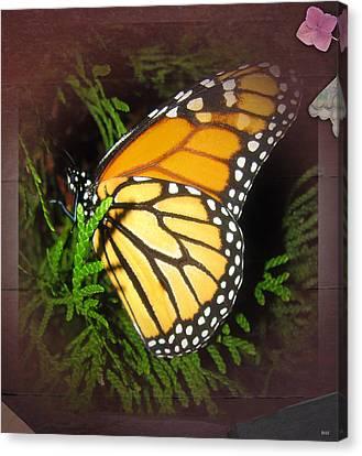 New Born Butterfly Canvas Print by Debra     Vatalaro