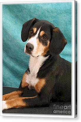 New Breed Entlebucher Pup Canvas Print by Maxine Bochnia