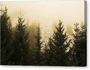 New Dawn Canvas Print by Terrie Taylor