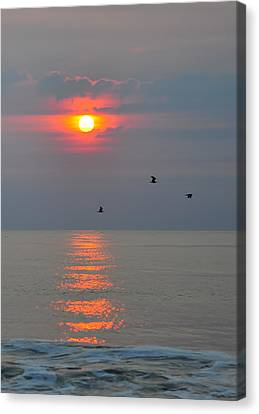 New Day Canvas Print by Tazz Anderson