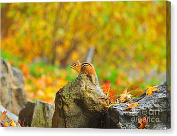 New Hampshire Chipmunk Canvas Print by Catherine Reusch Daley