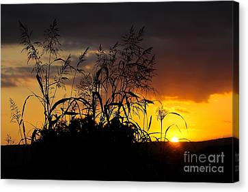 Canvas Print featuring the photograph New Image by Everett Houser