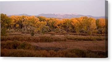 New Mexican Fall Canvas Print by Denice Breaux
