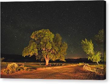 New Mexico Stars Canvas Print by Mark Fesgen