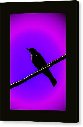 Canvas Print featuring the photograph New Mu Robin by Susanne Still