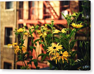 New York City Flowers Along The High Line Park Canvas Print by Vivienne Gucwa