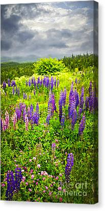 Newfoundland Meadow Canvas Print by Elena Elisseeva