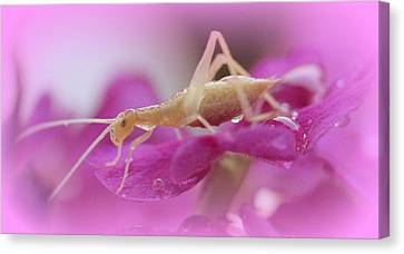 Newly Hatched Insect Canvas Print by Maureen  McDonald