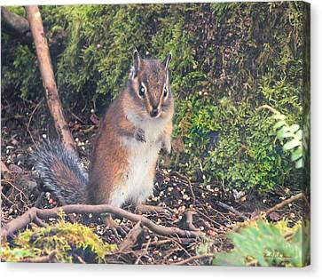 Canvas Print featuring the photograph Newport Squirrel by Wendy McKennon