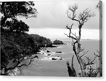 Ngunguru Bay New Zealand Canvas Print
