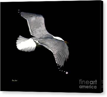 Night Flight Canvas Print by Dale   Ford
