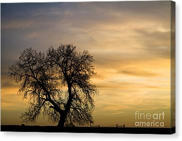 Night To Day Canvas Print by James BO  Insogna