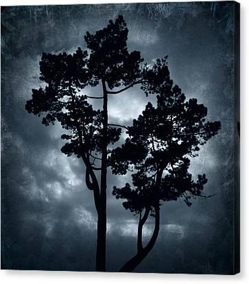 Night Tree Canvas Print by Svetlana Sewell