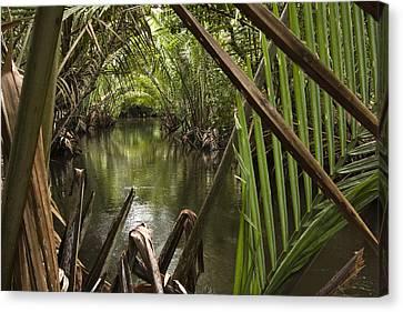Nipa Palms Line A Channel Canvas Print by Tim Laman